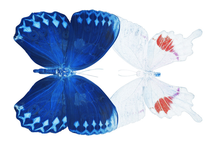 Art Print on Demand MISS BUTTERFLY DUO FORMOHERMOS - X-RAY White Edition