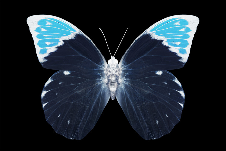Art Print on Demand MISS BUTTERFLY HEBOMOIA - X-RAY Black Edition