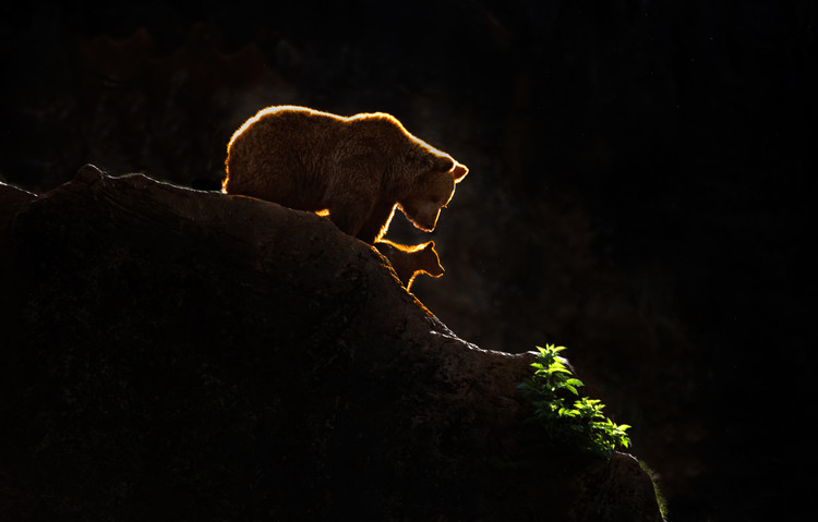 Art Print on Demand Mom bear with cub