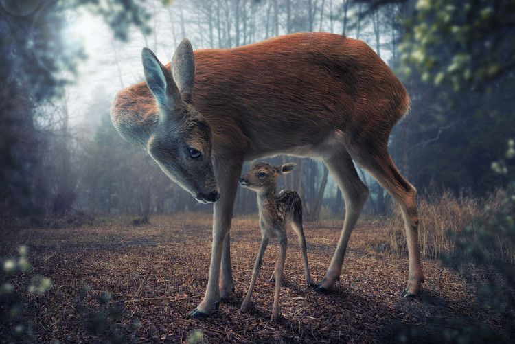 Art Print on Demand Mother and Fawn