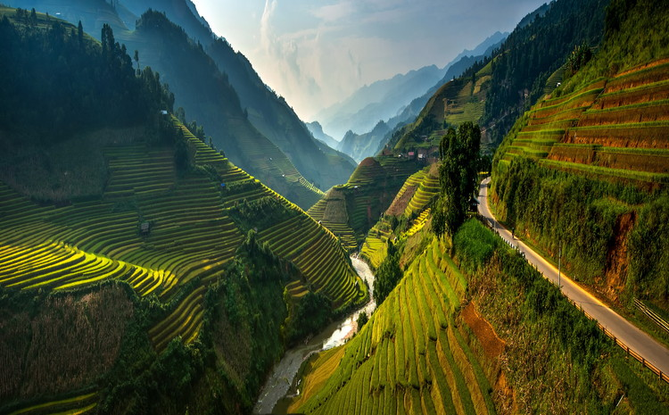 Art Print on Demand Mu cang chai