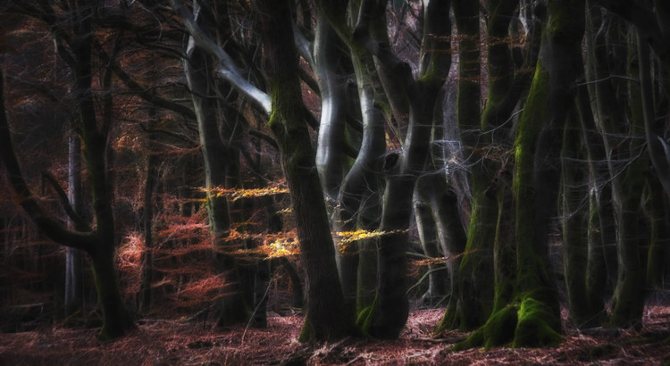 Art Print on Demand Mystical Speulderforest