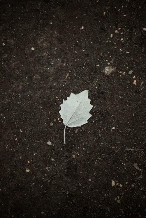 Art Print on Demand One white leaf on the black terrain