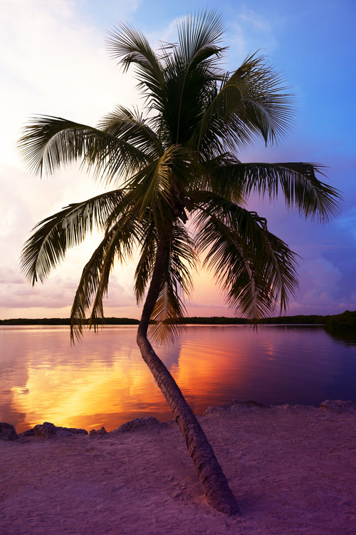 Art Print on Demand Palm Tree at Sunset - Florida