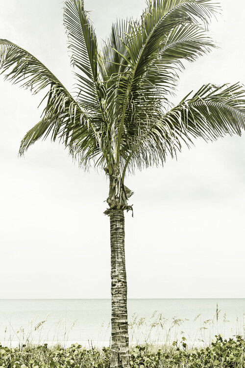 Art Print on Demand Palm Tree at the beach | Vintage