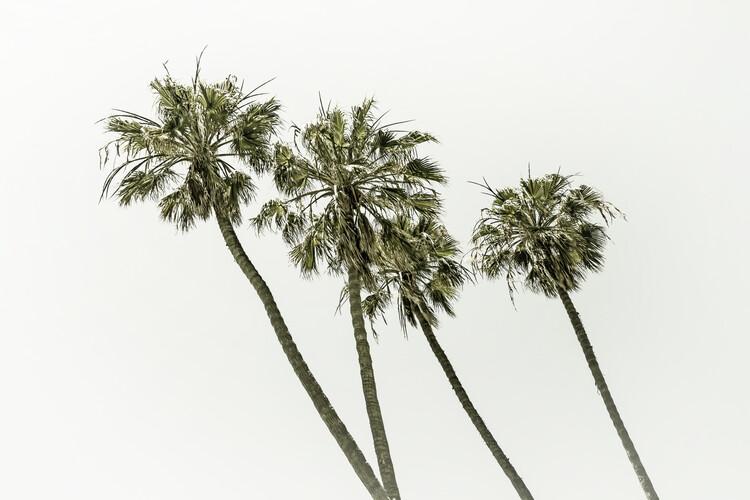 Art Print on Demand Palm trees by the sea | Vintage