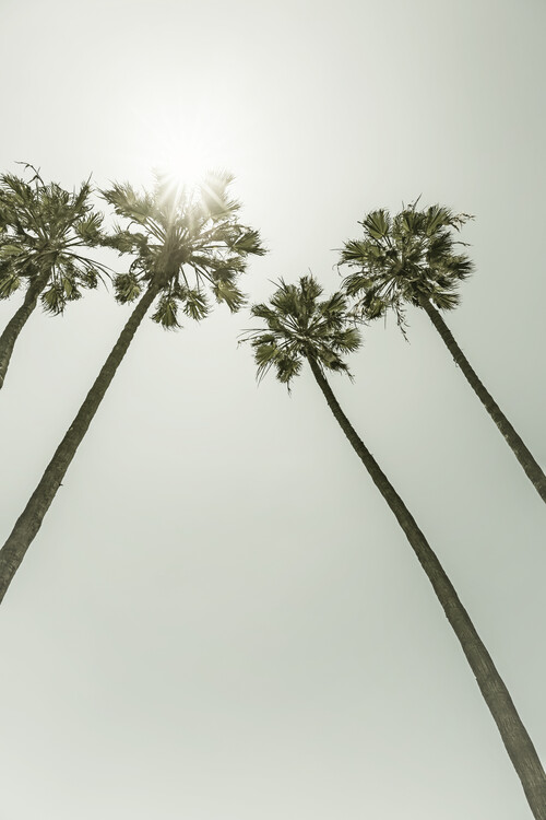 Art Print on Demand Palm Trees in the sun | Vintage