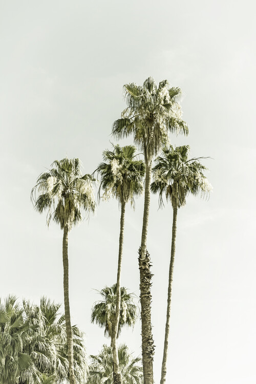 Art Print on Demand Palm Trees Summertime | Vintage