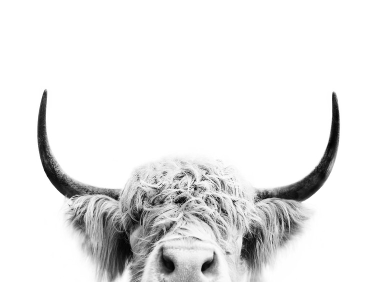 Art Print on Demand Peeking cow bw