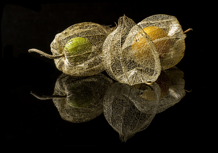 Art Print on Demand Physalis Alkekengi L.