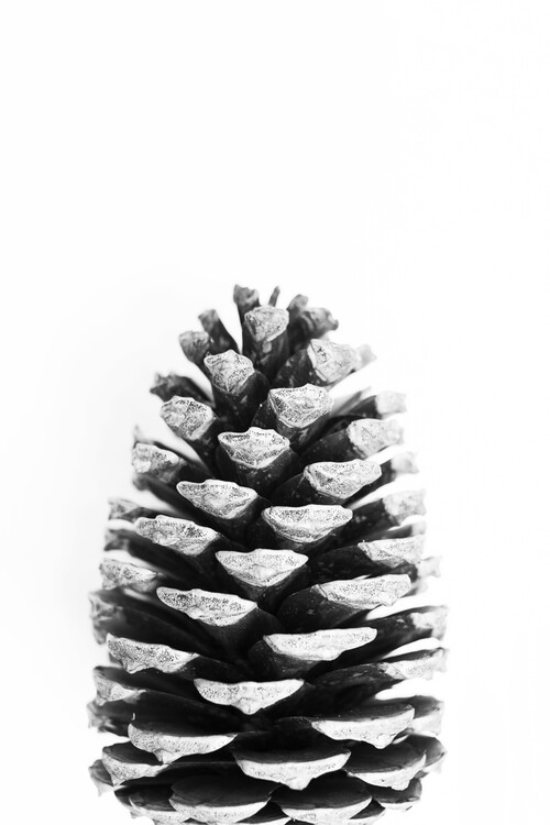 Art Print on Demand Pinecone