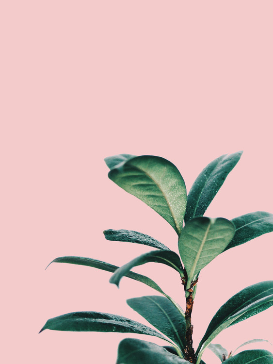 Art Print on Demand pink palm