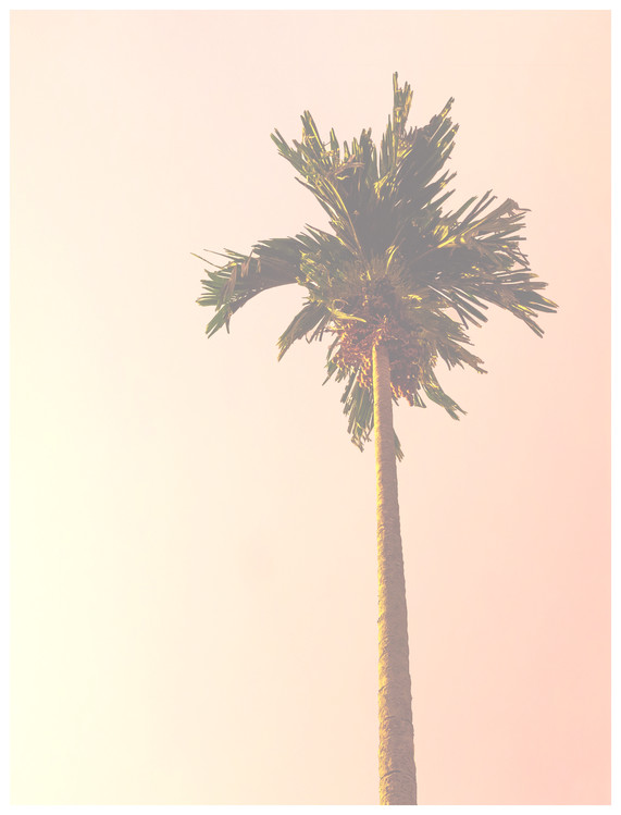 Art Print on Demand pink palm tree
