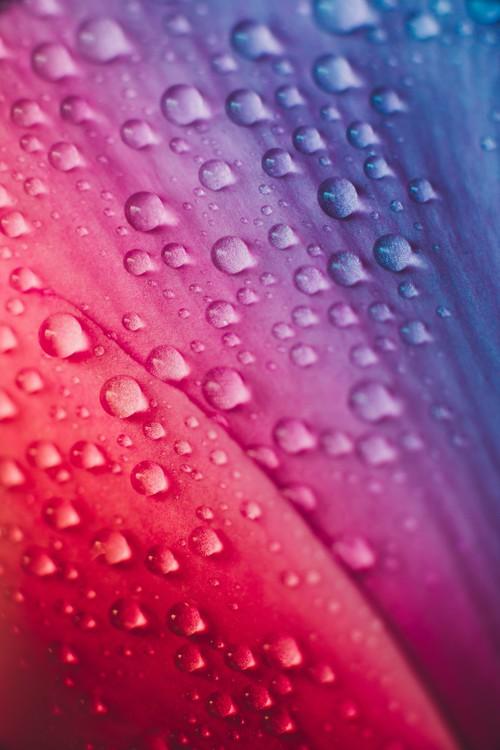 Art Print on Demand Raindrops over the plants