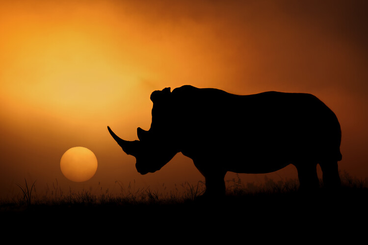 Art Print on Demand Rhino Sunrise