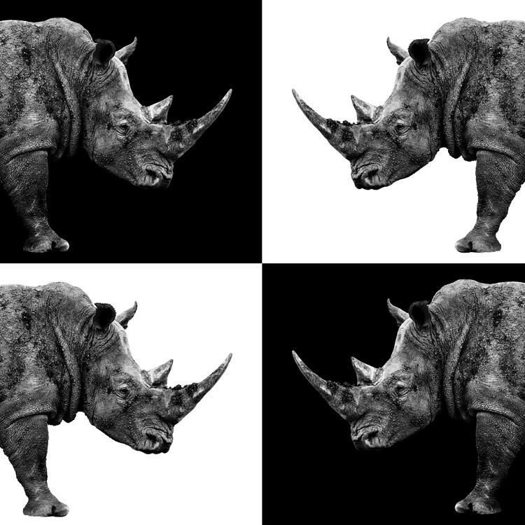 Art Print on Demand Rhinos