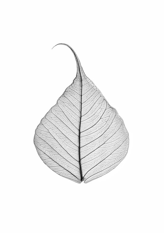 Art Print on Demand Skeleton leaf