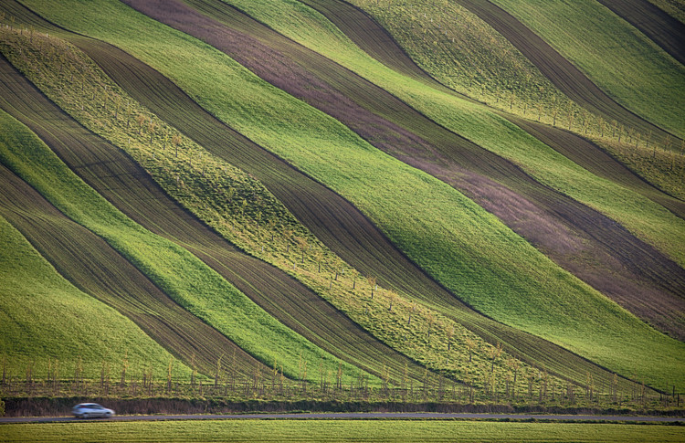 Art Print on Demand Stripes in the fields