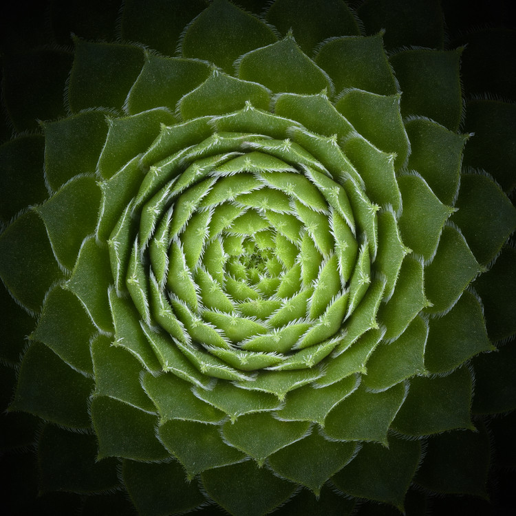 Art Print on Demand Succulent