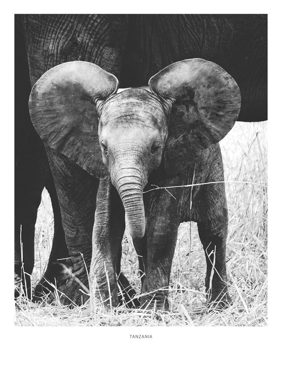 Art Print on Demand Tanzania6