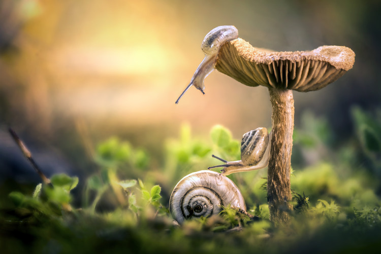 Art Print on Demand The Awakening of Snails