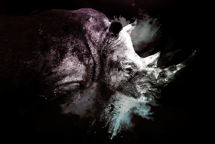 Art Print on Demand The Rhino