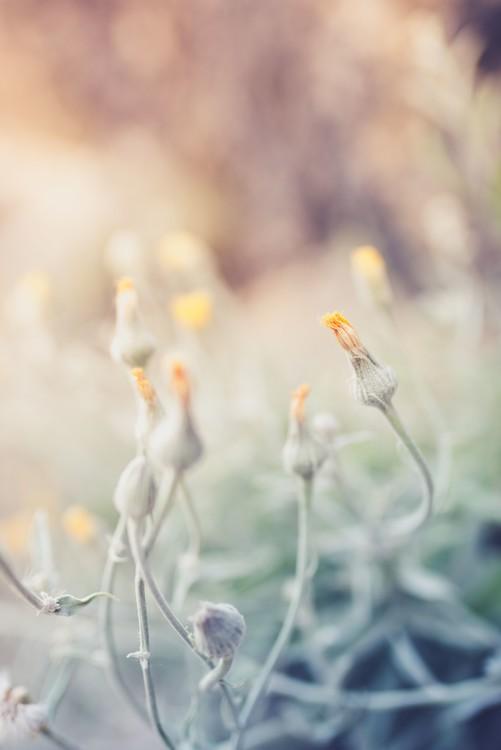 Art Print on Demand Tiny flowers at sunset