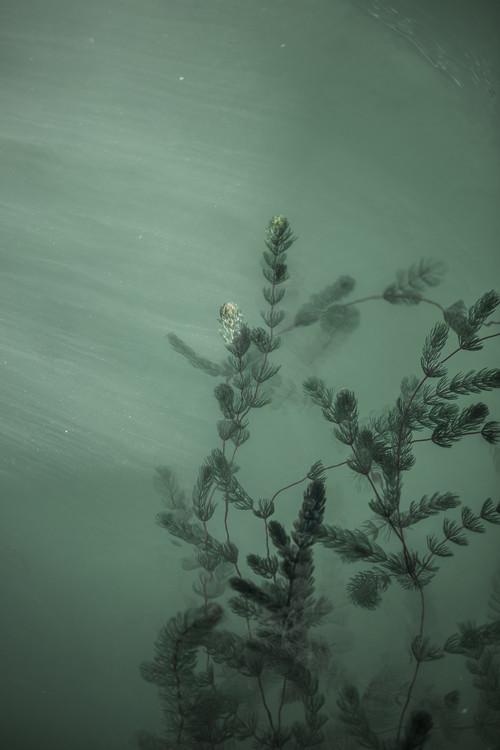 Art Print on Demand Underwater plants