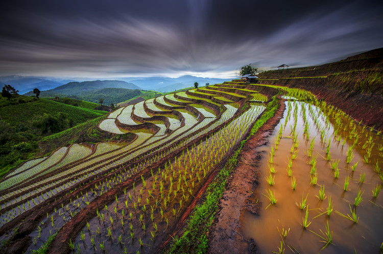 Art Print on Demand Unseen Rice Field
