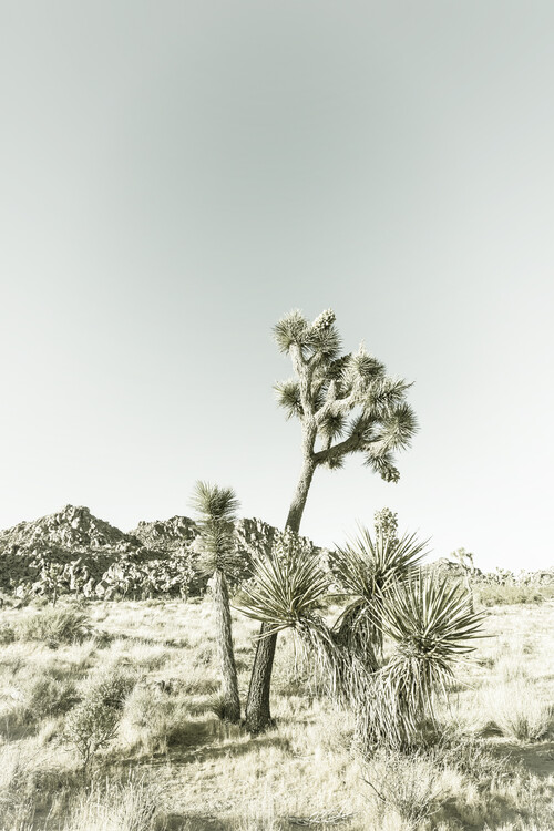 Art Print on Demand Vintage Joshua Trees