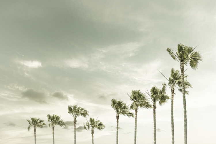 Art Print on Demand Vintage Palm Trees at the beach