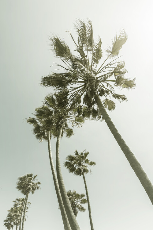 Art Print on Demand Vintage Palm Trees in the sun