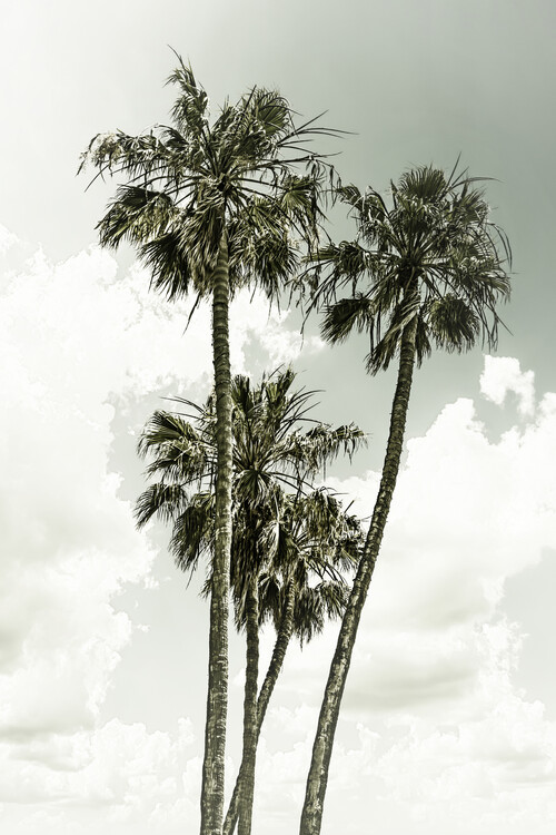 Art Print on Demand Vintage palm trees summertime