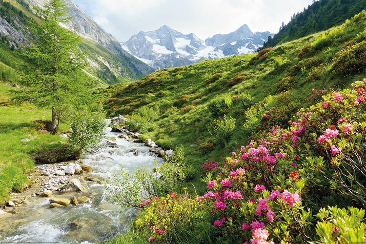 Poster Alps - Nature and Mountains