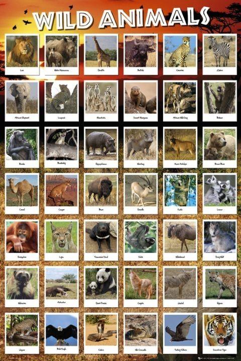 Animals Poster, Art Print