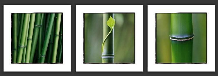 Bambous Art Print