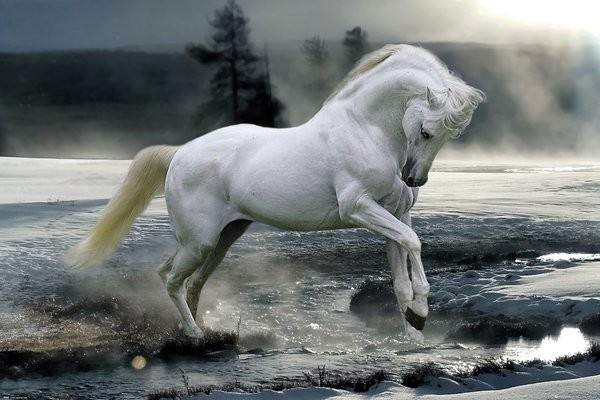 Bob Langrish - Horse Snow Poster