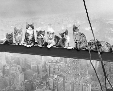 Poster Cats on Girder