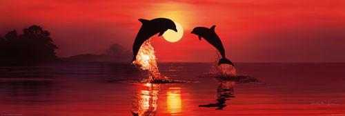 Pôster CHRISTIAN R.LASSEN - dolphin dawn