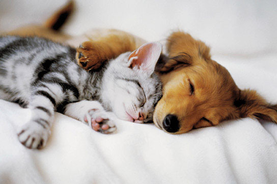 Cuddles Poster