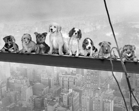 Dogs on Girder Poster