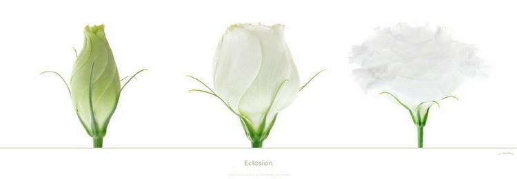 Eclosion Art Print