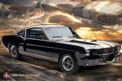 Pôster Ford Shelby - Mustang 66 gt350