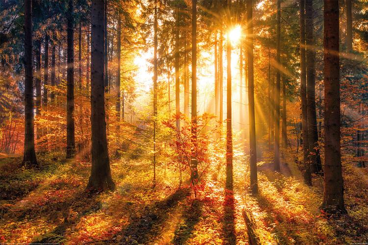 Poster Forrest - Sun