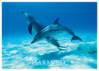 Harmony - dophins Poster