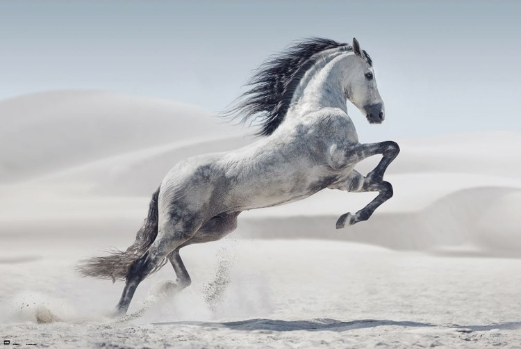 Horse - Andaluz Poster