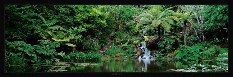 Jardin d'Ayrlies - Auckland - New Zeland Art Print