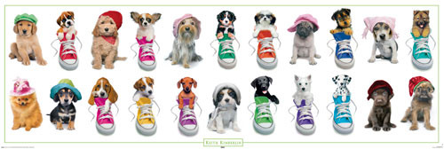 Keith Kimberlin – Dogs with Hats and Sneakers Poster
