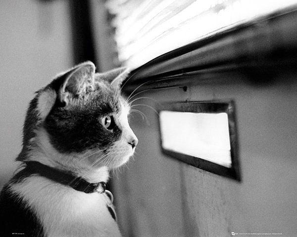 Poster Kitten - Letterbox