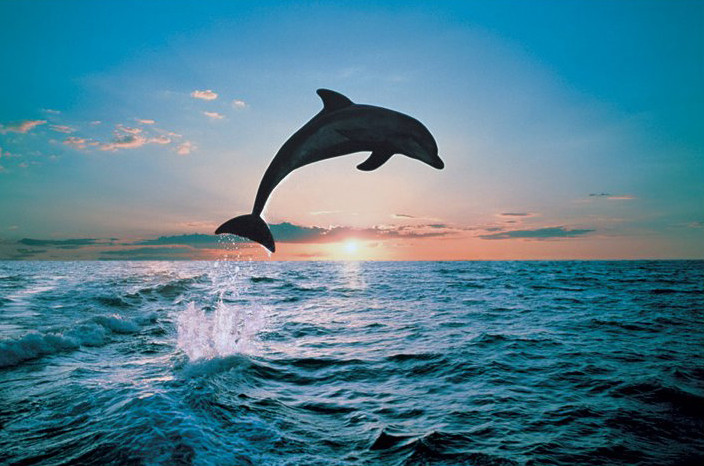 Leap of freedom - dolphin Poster, Art Print